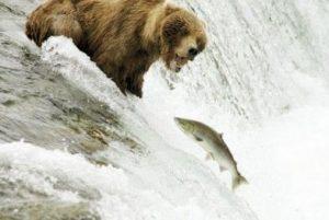 Destino: Alaska