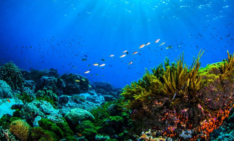Dìa mundial de los océanos
